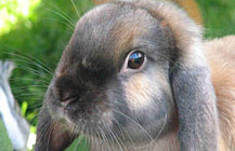pension-kaninchen-bonn