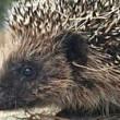 Tierschutz-Tipps für den Garten