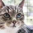 Kitty – WARUM schon jetzt?
