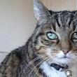 Halsbänder: für Katzen lebensgefährlich