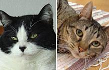 Pina und Piwi – ein Katzenpaar im Unglück
