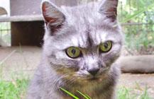 Tabby – kein gutes Katzenleben
