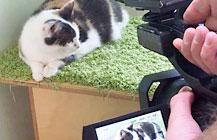 Bella & Milo bei »Tiere suchen ein Zuhause«