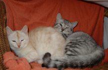 Zwei Katzenkinder auf der Suche nach dem großen Glück