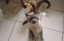 Ein zauberhaftes Katzenpaar
